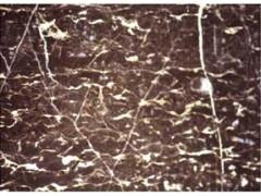 大理石 云浮市/供应深啡网板材,咖啡色大理石板材,进口大理石,丰业石材...